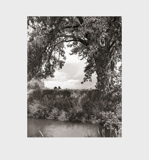 Robert Adams – Cottonwoods